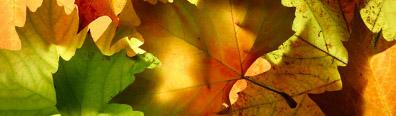 clientpg_leaf